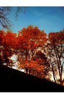 Trees by StarDuskDreams