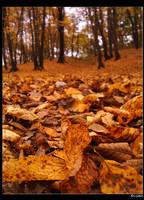 autumnal carpet by skaterboy8910