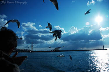 Seagull and Mosque