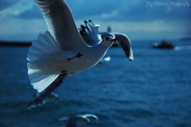 Seagull and Mosque-3