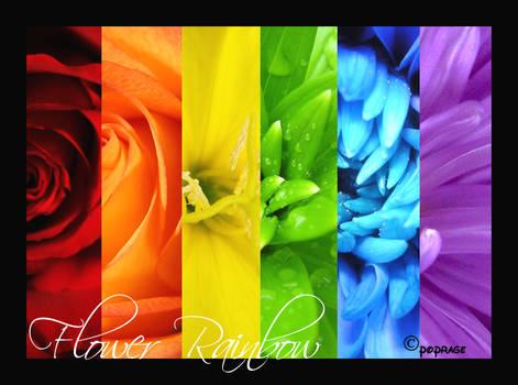 FLower Rainbow -Big