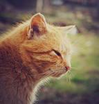 Sunny cat