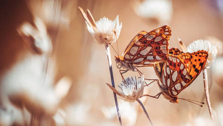 FlowerPower with a hint of a butterflies