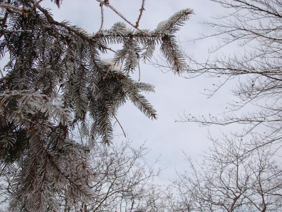 Winter by hermiona1988