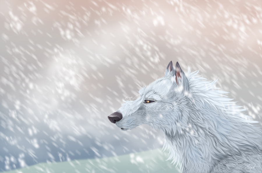 http://fc00.deviantart.net/fs70/i/2012/218/c/c/the_white_wolf_by_hecatehell-d5a0kwn.png