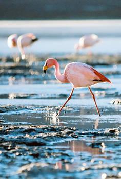 Freezing Flamingo