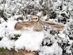 Barn owl poseable art doll by EleanHellkatie