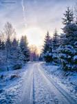 Walk through the winter forest