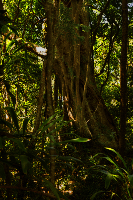 Rainforest by Dryad-8