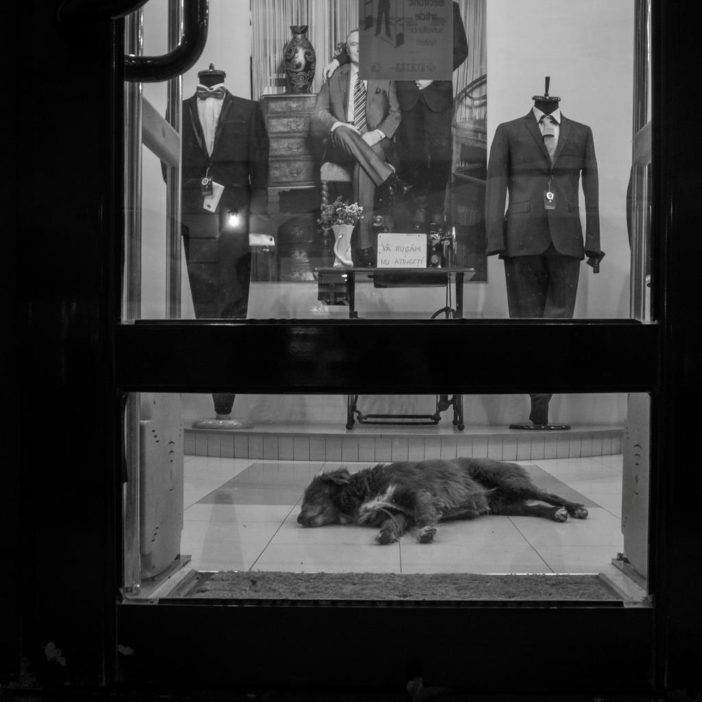 Night watchdog by Annanoke