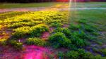 Sun Shining on Bluebonnets by Gensotsuki