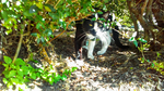 Cat in a Bush by Gensotsuki