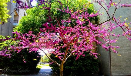 Flower Tree by Gensotsuki