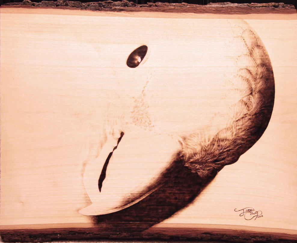 Galah Cockatoo - Pyrography on Basswood by james-cramp-art