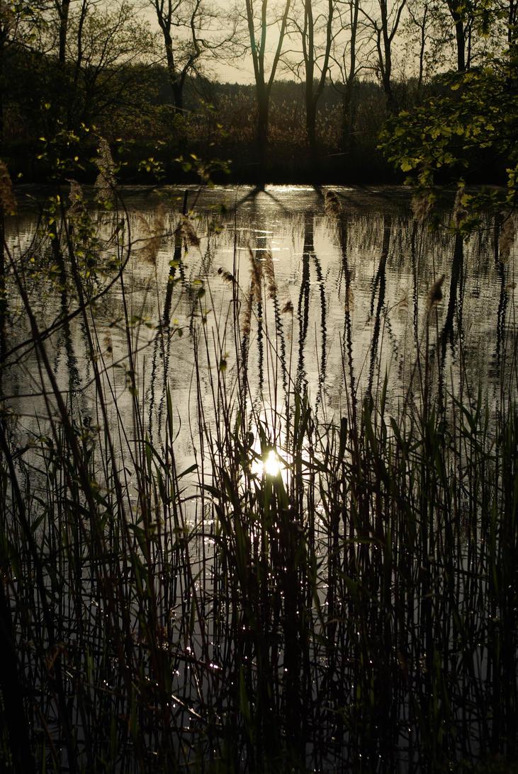 lake by Rrobert