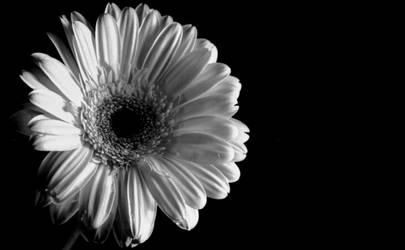 flower in the dark 2 by impoliticus