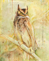 The Owls Are Not What They Seem (II)
