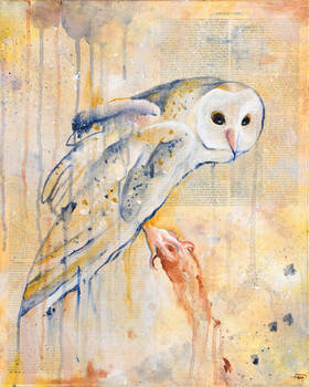 The Owls Are Not What They Seem III by bedowynn