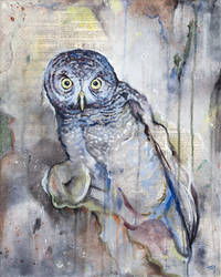 The Owls Are Not What They Seem IV by bedowynn