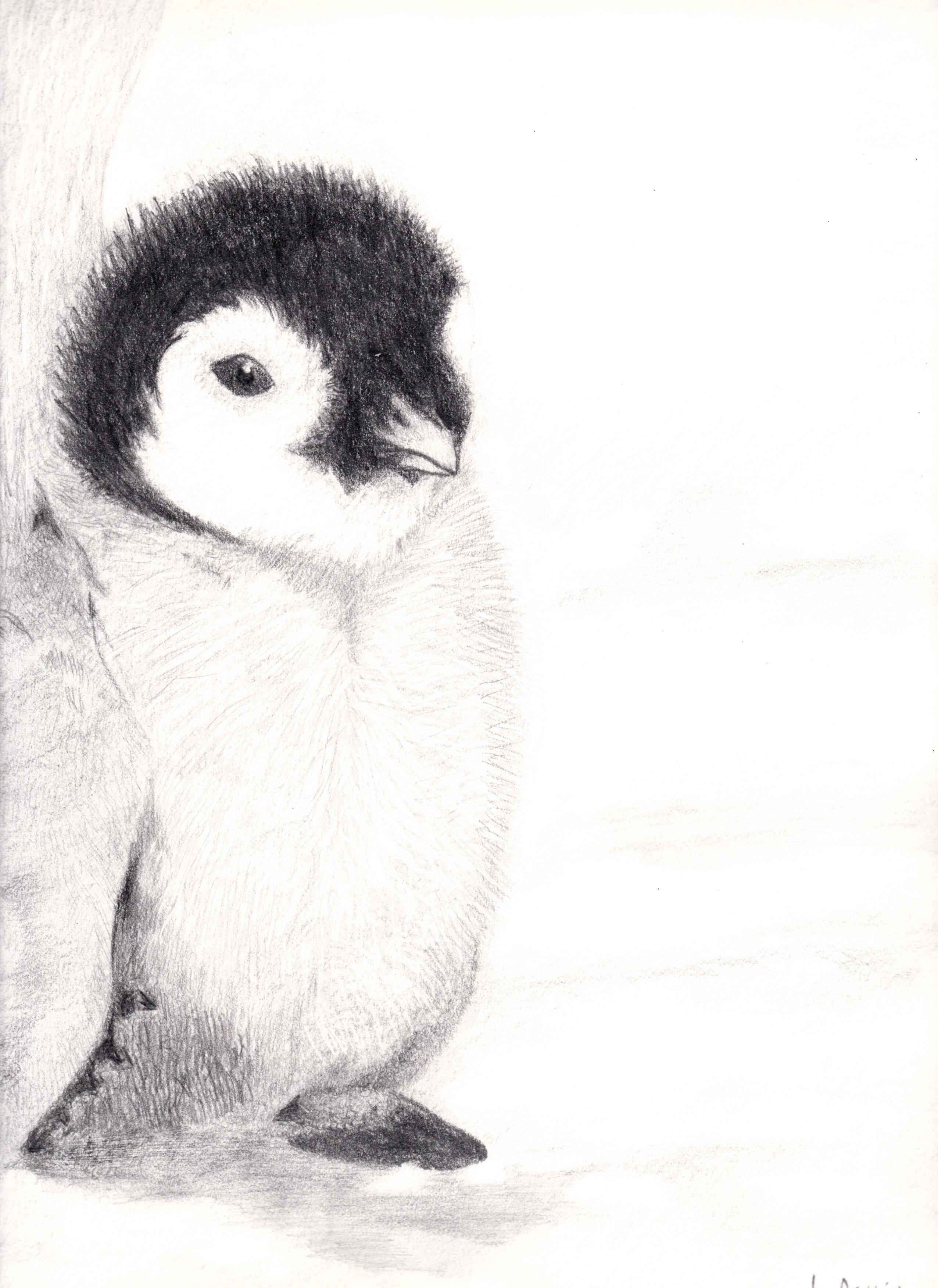 Penguins drawing - photo#52