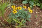 Flower Stock 11