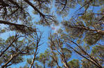Forest Canopy Stock