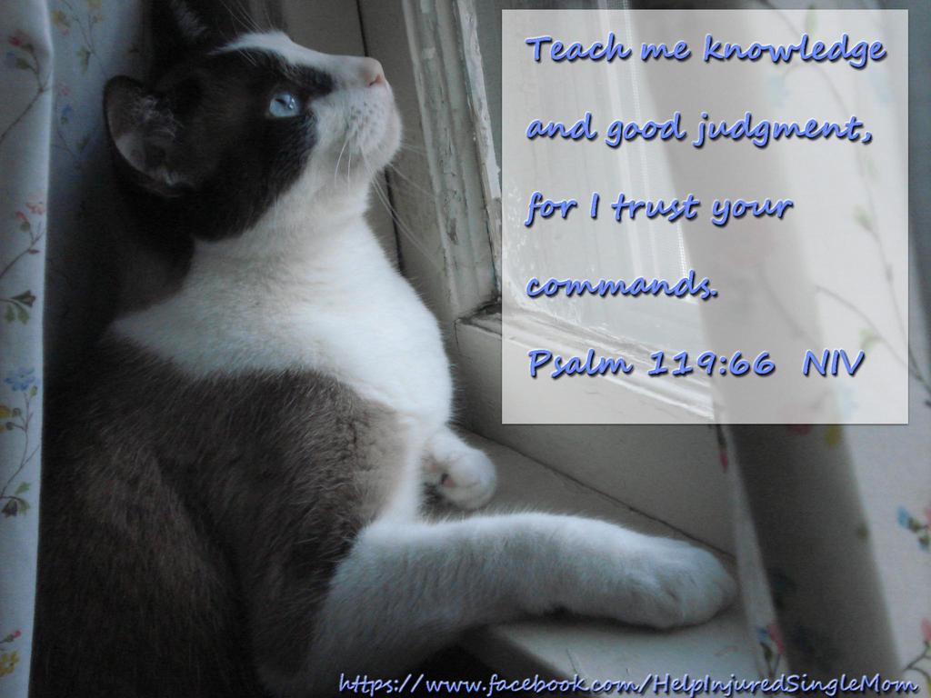 Psalm 119:66  NIV by neice1176