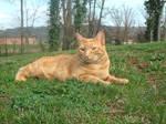 Stock Image - Kitty 1