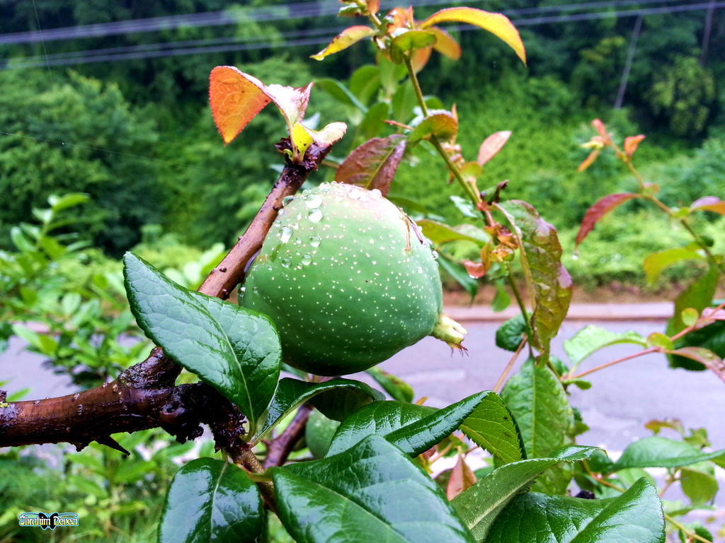fruit by deveciufuk