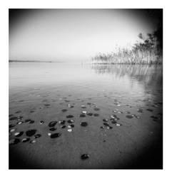 0025 by alligatorWine