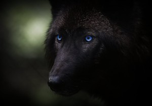 IndieAlternativeRock's Profile Picture