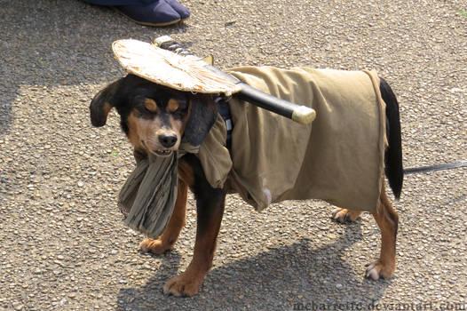 Samurai Dog