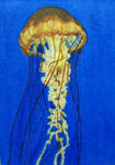 Jellyfish on ATC