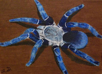 blue tarantula on ATC by TinyAna