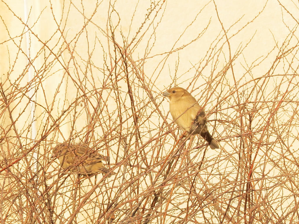Bird2 by MS-Make