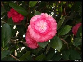 flower 4 by DOGGIEDOGGIE