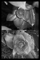 flower 5 by DOGGIEDOGGIE