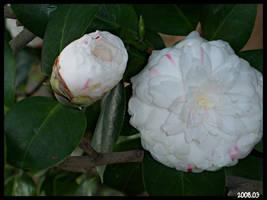 flower 6 by DOGGIEDOGGIE