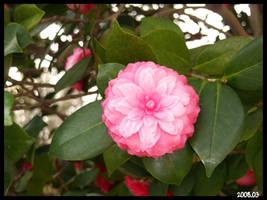 flower 7 by DOGGIEDOGGIE
