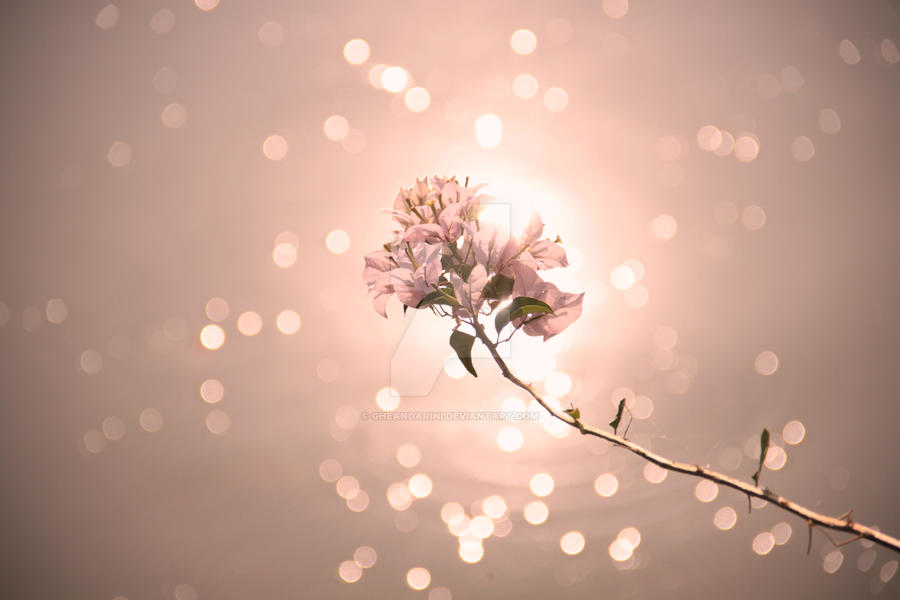 Fade in Pink by gheandarini