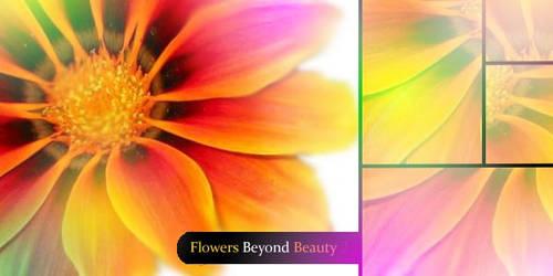 Flowers Beyond Beauty 2