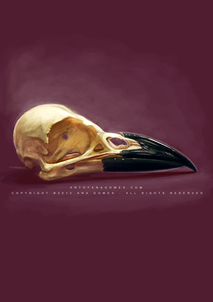 Crow skull by Whiteparasite