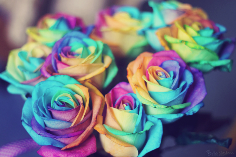 Rainbow roses by ur6o on deviantart for How to color roses rainbow