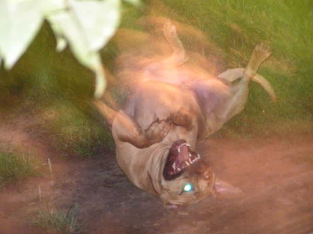Possessed_Dog.JPG by SnowWhisker4