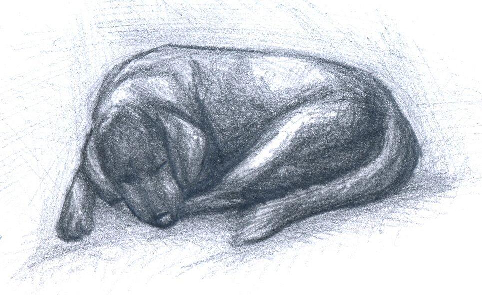 [RYSUNKI]- czyli mini Deviant Saf Sleeping_dog_by_fandragonball-d6aprle