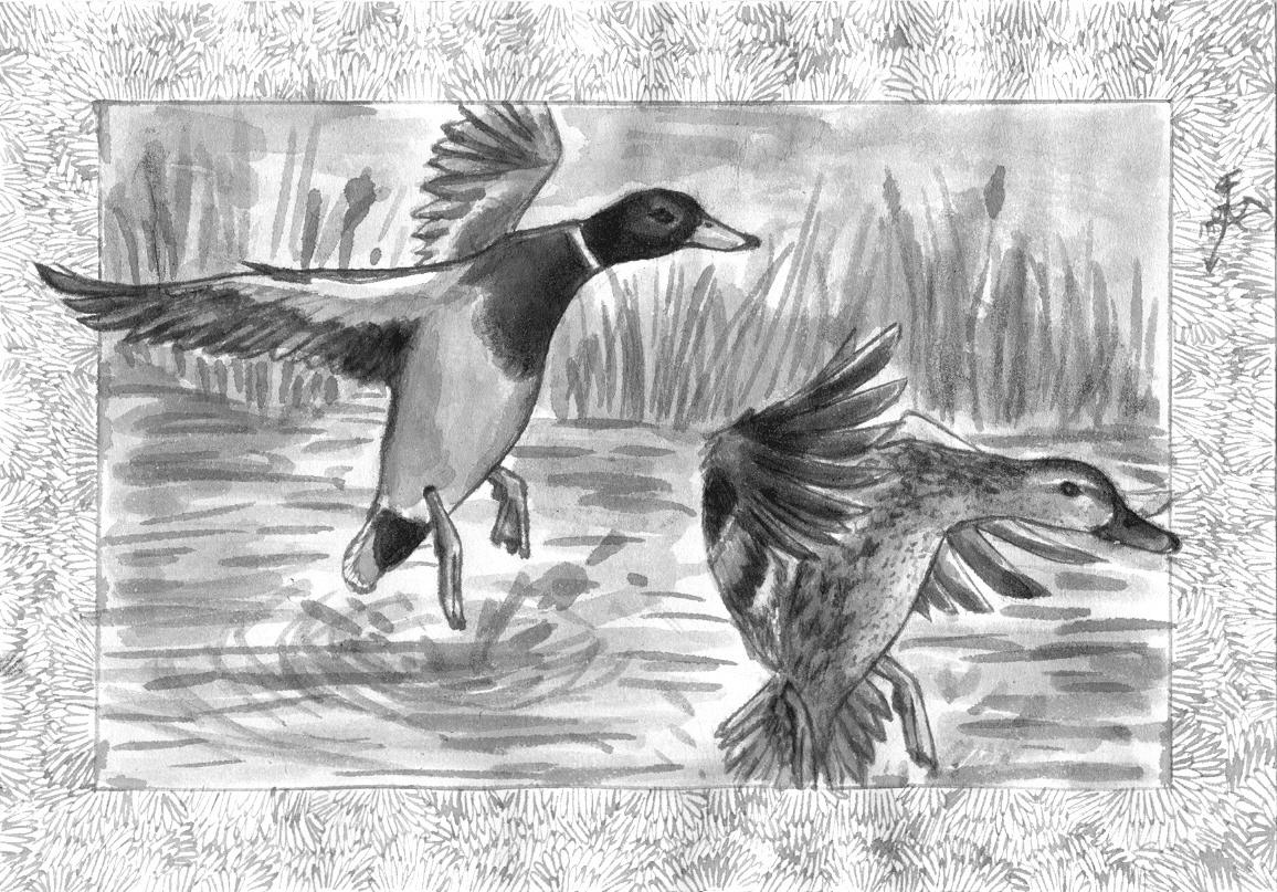 [RYSUNKI]- czyli mini Deviant Saf - Page 4 Ink_ducks_by_fandragonball-d7n6dr4