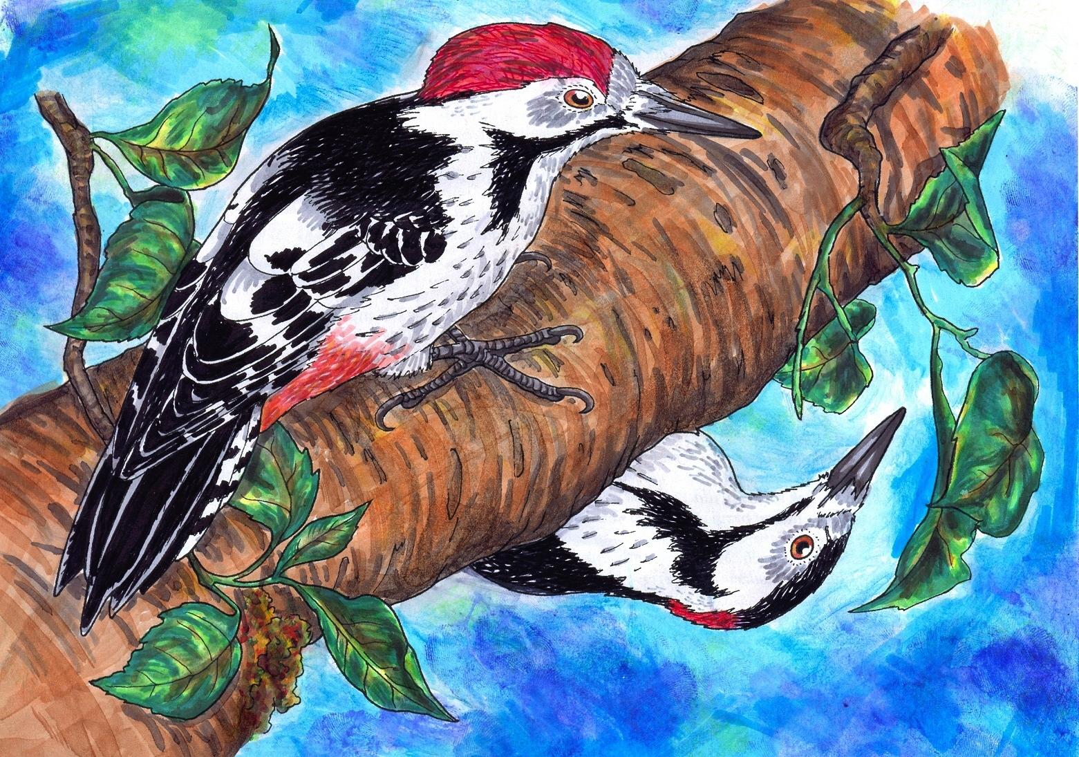 [RYSUNKI]- czyli mini Deviant Saf - Page 6 Woodpeckers_by_fandragonball-da0b8hb