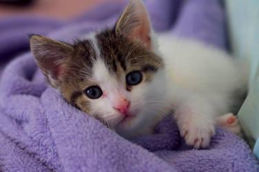 Cutest Bebe by boalyssa