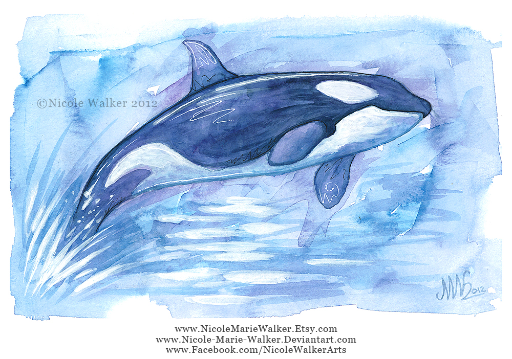 Orca by Nicole-Marie-Walker