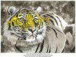 Masked Tiger